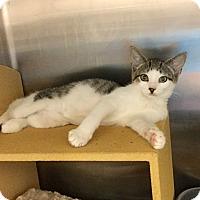 Adopt A Pet :: Fawn - Colmar, PA