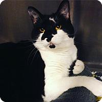 Adopt A Pet :: Willow - Sewaren, NJ