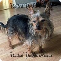 Adopt A Pet :: Diego - Visa, CA