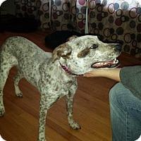 Adopt A Pet :: Anna - Codorus, PA