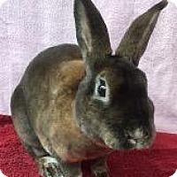 Adopt A Pet :: Coffee - Woburn, MA