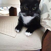 Adopt A Pet :: zz - Gabby (courtesy listing) - West Palm Beach, FL