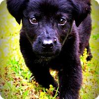 Adopt A Pet :: Jeeves - Glastonbury, CT