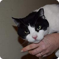 Adopt A Pet :: Stas - Staten Island, NY