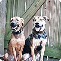 Adopt A Pet :: Bert and Ernie - Houston, TX