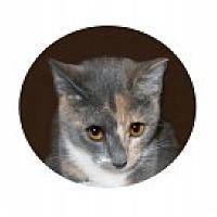 Adopt A Pet :: Christy - Colorado Springs, CO
