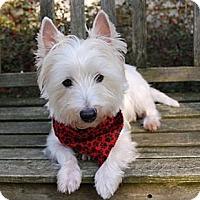Adopt A Pet :: Duffy - GARRETT, IN
