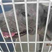Adopt A Pet :: Marilyn Monroe - Phoenix, AZ