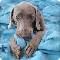 Adopt A Pet :: Sophie - Attica, NY