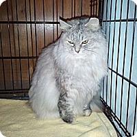 Adopt A Pet :: Annika - Grand Rapids, MI