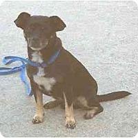 Adopt A Pet :: Tiny - Washington, NC