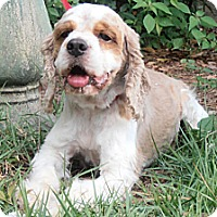 Adopt A Pet :: Dempsey - Sugarland, TX