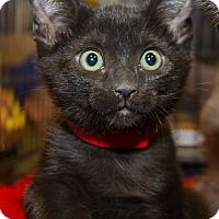 Adopt A Pet :: Chase - Irvine, CA