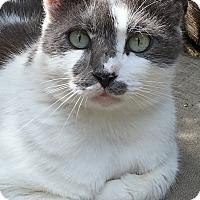 Adopt A Pet :: Darwin - Naples, FL