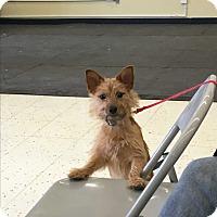 Adopt A Pet :: Wyatt - Algonquin, IL