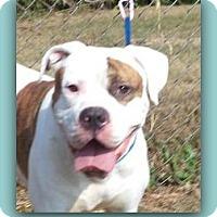 Adopt A Pet :: Buck - Alpharetta, GA