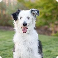 Adopt A Pet :: Jax - Fresno, CA