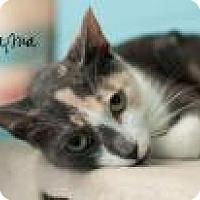 Adopt A Pet :: Mama - Middleburg, FL