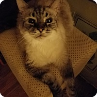 Adopt A Pet :: Keiffer - Columbus, OH