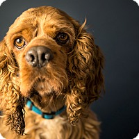 Adopt A Pet :: Elliott - Seattle, WA