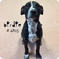 Adopt A Pet :: Birdie - Alvin, TX