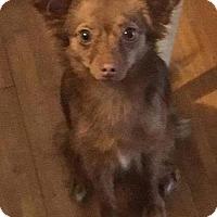 Adopt A Pet :: JEMMA - Lawton, OK