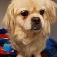 Adopt A Pet :: Allie - Woodstock, GA