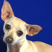 Adopt A Pet :: Billy Ray - Show Low, AZ