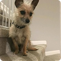 Adopt A Pet :: Meeko - Denver, CO