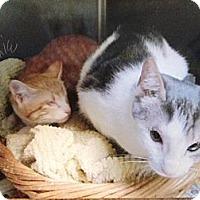 Adopt A Pet :: Moxie & Wink - Deerfield Beach, FL