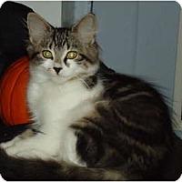 Adopt A Pet :: Rosie - Elmira, ON