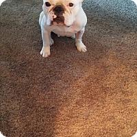 Adopt A Pet :: Alli - Cibolo, TX