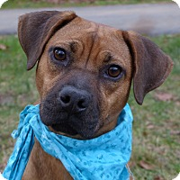 Adopt A Pet :: Juanita - Mocksville, NC