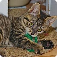 Adopt A Pet :: Brittany - Davis, CA