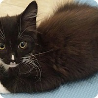 Adopt A Pet :: Tribble - North Highlands, CA