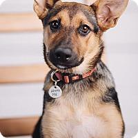 Adopt A Pet :: Penny - Portland, OR