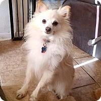 Adopt A Pet :: Pearls - conroe, TX