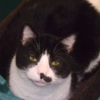 Adopt A Pet :: Fionese - Muscatine, IA