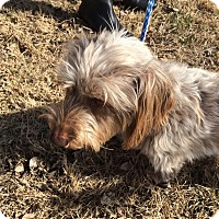 Adopt A Pet :: George - Lincoln, NE