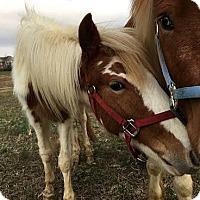 Adopt A Pet :: Venus - Loudon, TN