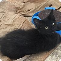 Adopt A Pet :: Cheerio - Yorba Linda, CA