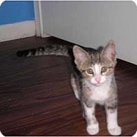 Adopt A Pet :: Shandy - Warren, MI