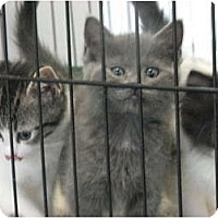 Adopt A Pet :: Last Litter of 2011 - Richfield, OH