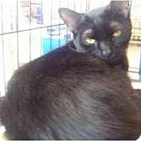 Adopt A Pet :: Licorice - Easley, SC