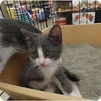 Adopt A Pet :: Henry - Warren, MI