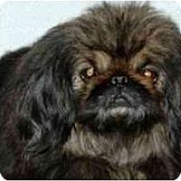 Adopt A Pet :: Jadien - Mays Landing, NJ