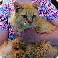 Adopt A Pet :: Desi - Albany, NY