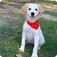 Adopt A Pet :: Kitia - Temple City, CA