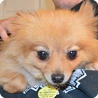 Adopt A Pet :: Kennedy - Prole, IA