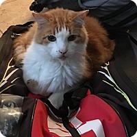 Adopt A Pet :: Tuffy - Spring, TX
